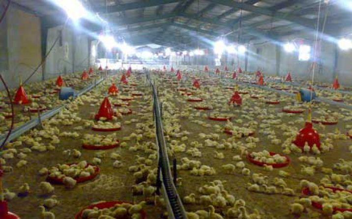 شیوع آنفولانزای پرندگان در استان مرکزی خطری برای قم