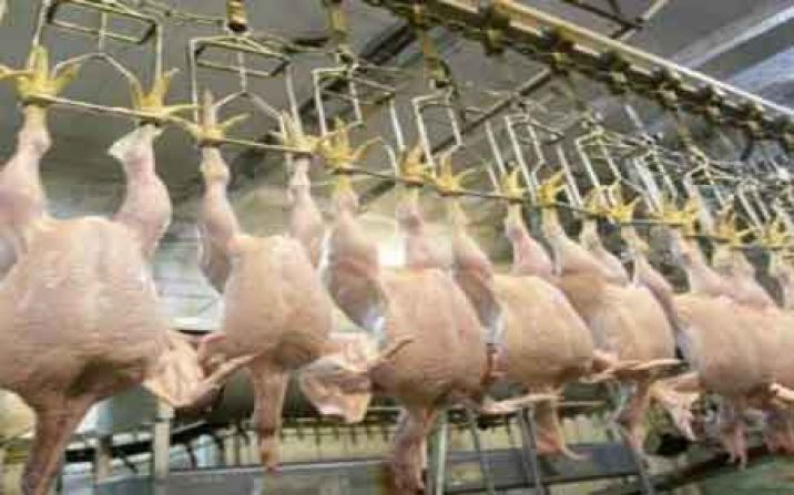 400 تن مرغ منجمد با قیمت 14 هزار تومان در قم ذخیره شد