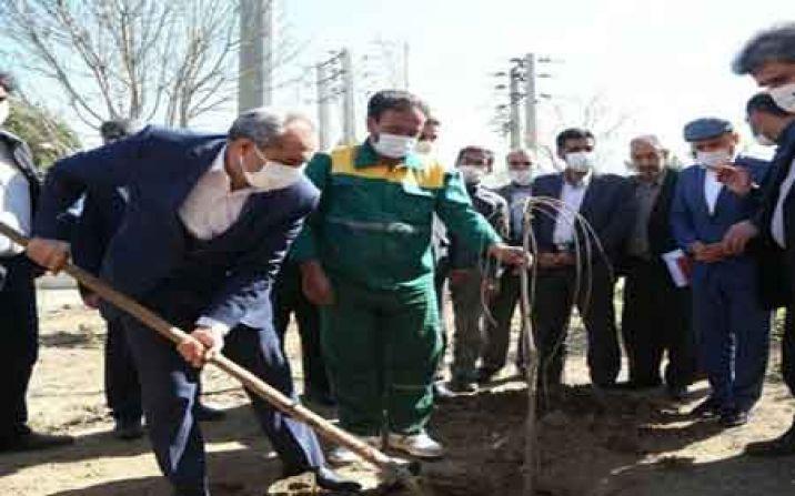 استاندار قم در آستانه روز درختکاری نهال غرس کرد