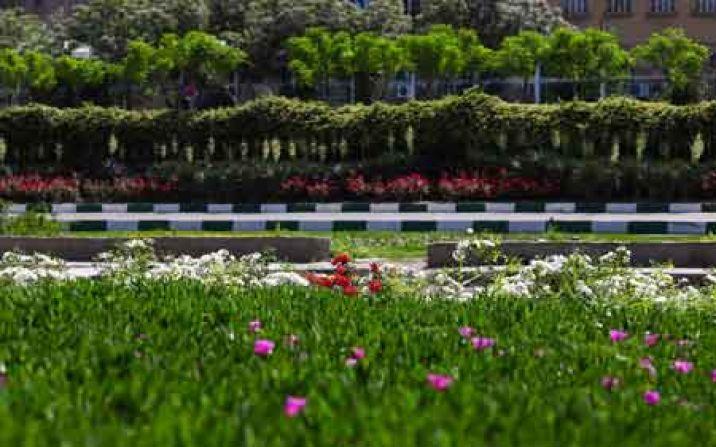 تولید و کاشت سالانه یکمیلیون و ۳۰۰ هزار گل زینتی در قم